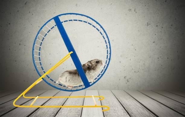 Hamster. stock photo