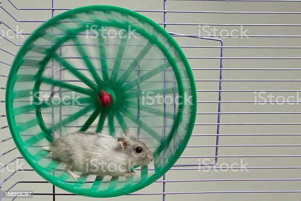 Hamster running in the wheel picture id158358097?b=1&k=6&m=158358097&s=612x612&h=3lcx80i5lejbjs9heqdqdb2uqm3z4w3hay814ndliki=