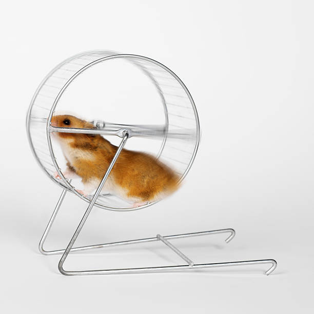 Hamster running on a silver wheel stock photo