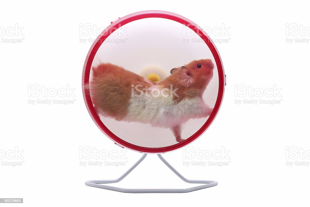 Hamster running on an exercise wheel stock photo