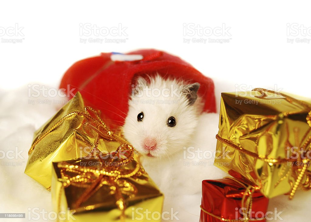 Hamster with Christmas gifts. royalty-free stock photo