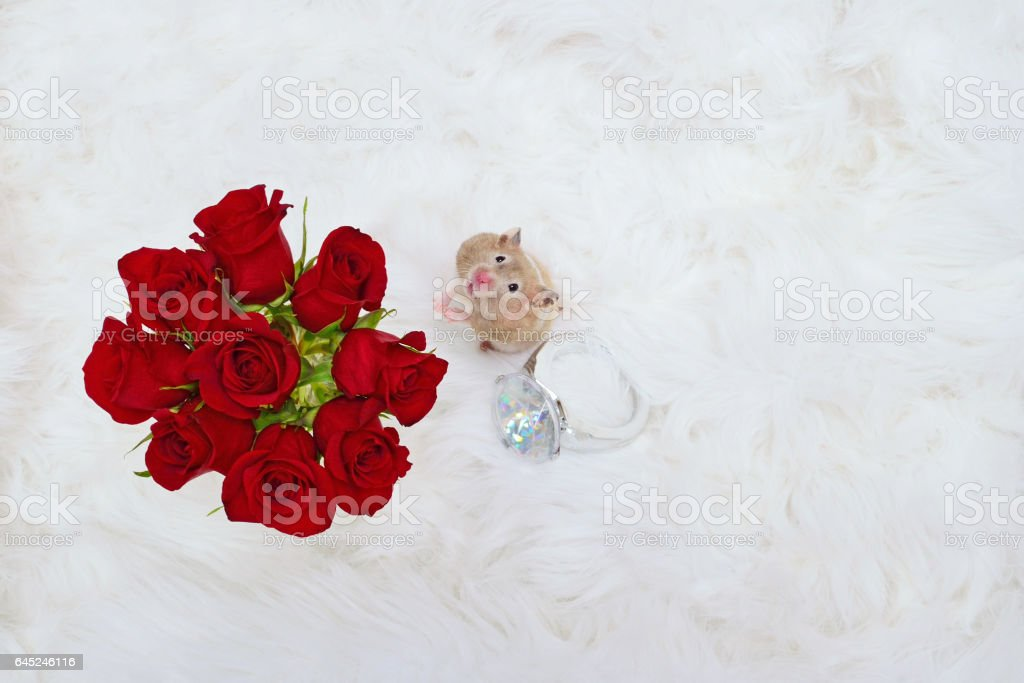 Hamster with Roses and Ring stock photo