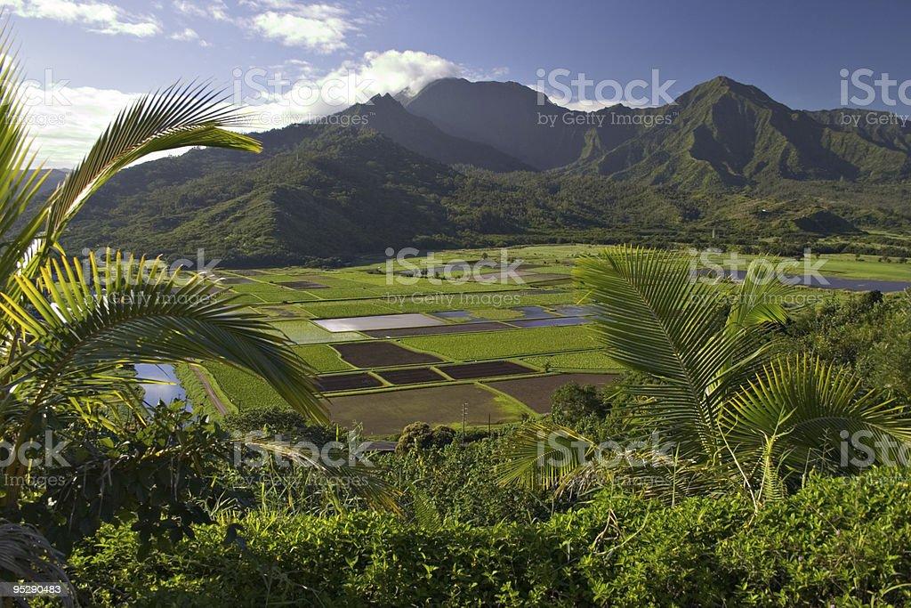 Hanalei River Valley & Taro Fields Vista - Kauai, Hawaii stock photo