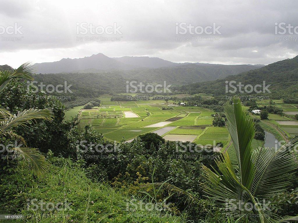 Hanalei Valley stock photo