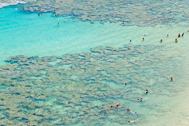 Hanauma Bay Nature Park Snorkelers stock photo