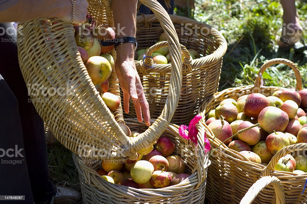 Hand and baskets with apples royalty-free stock photo