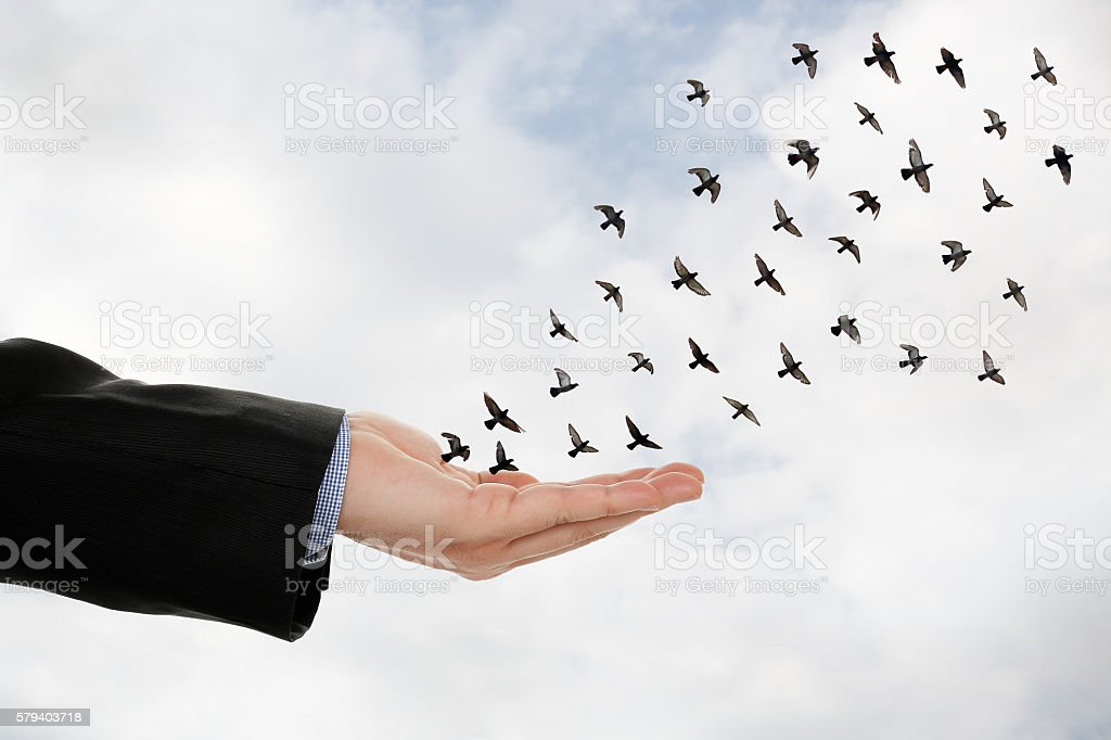 hand and birds stock photo