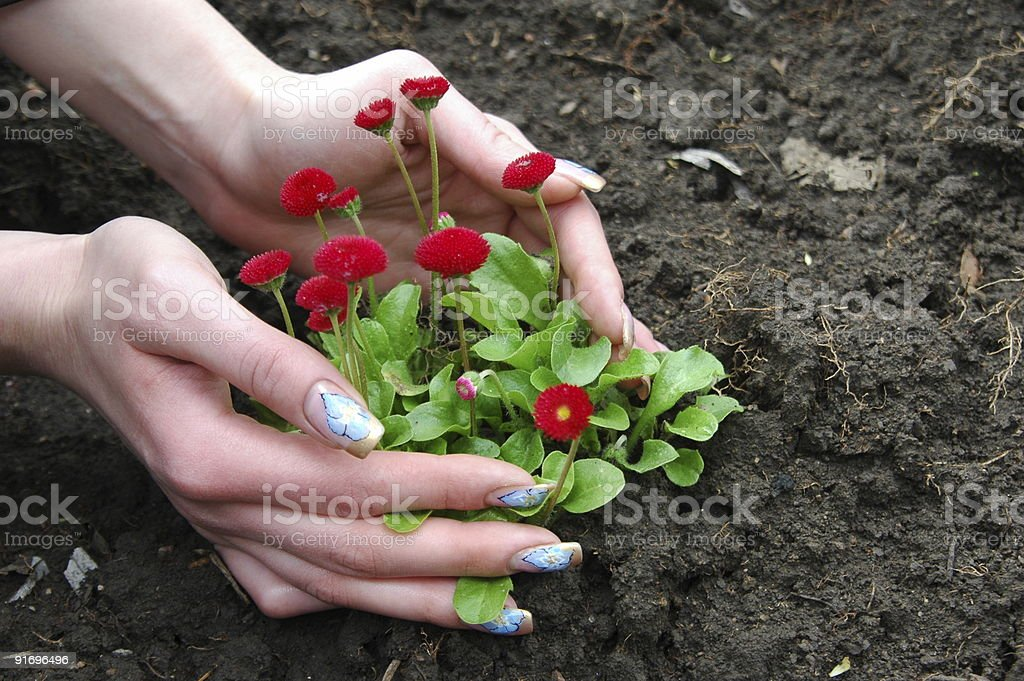 Hand and flower royalty-free stock photo
