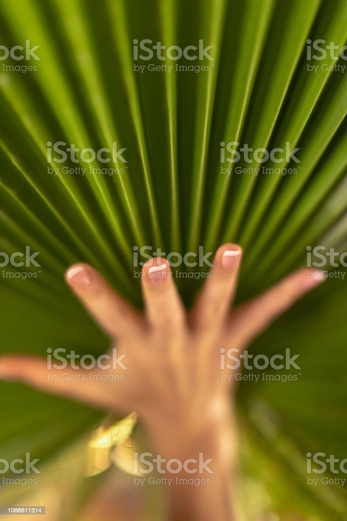 El ve palmiye yaprağı stok fotoğrafı