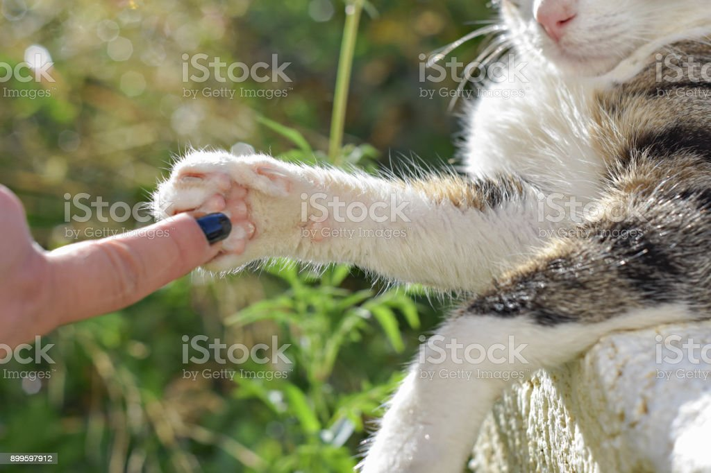 conceptual image of friendship between people and animals