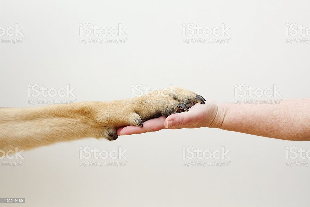 hand and paw white background stock photo