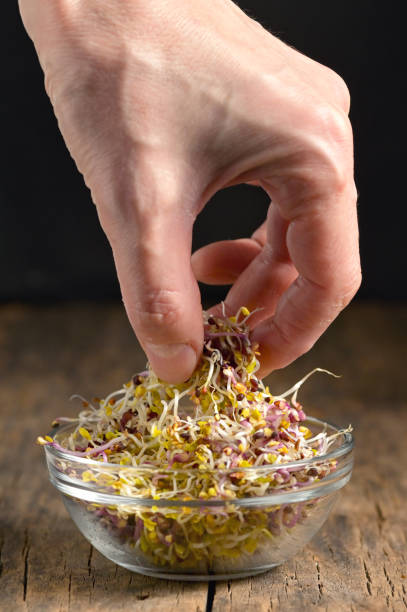 Hand and Pile Of Alfalfa Sprouts stock photo