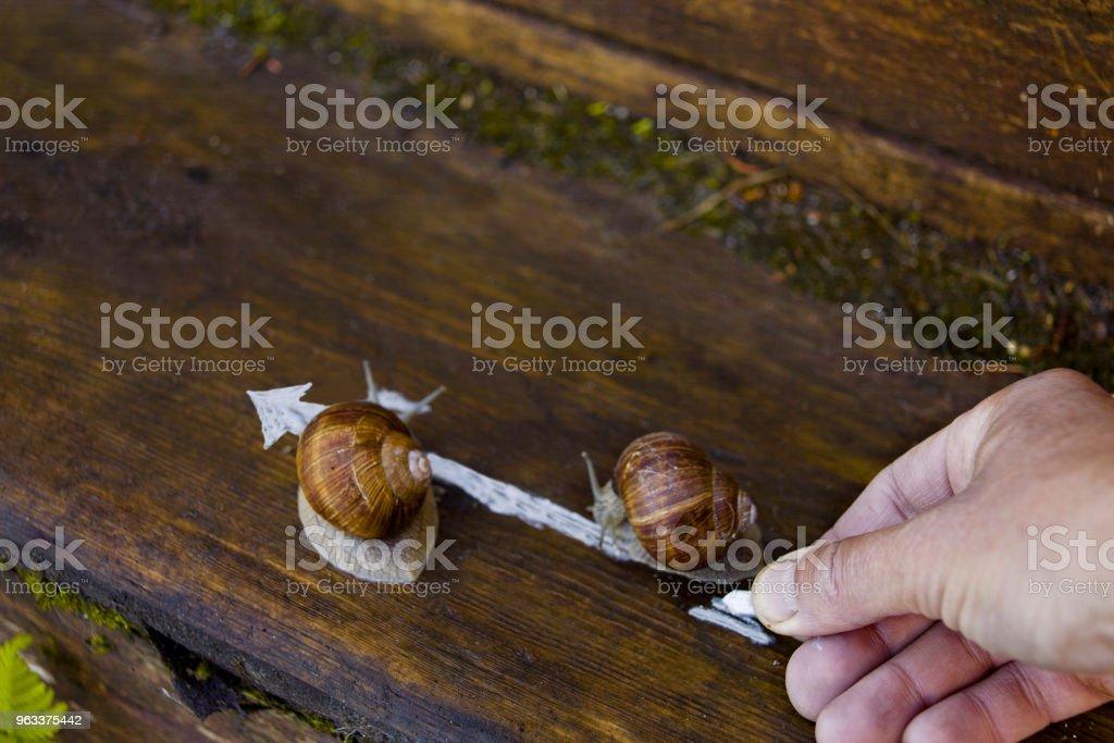 Hand And Snails - Zbiór zdjęć royalty-free (Czołgać się)