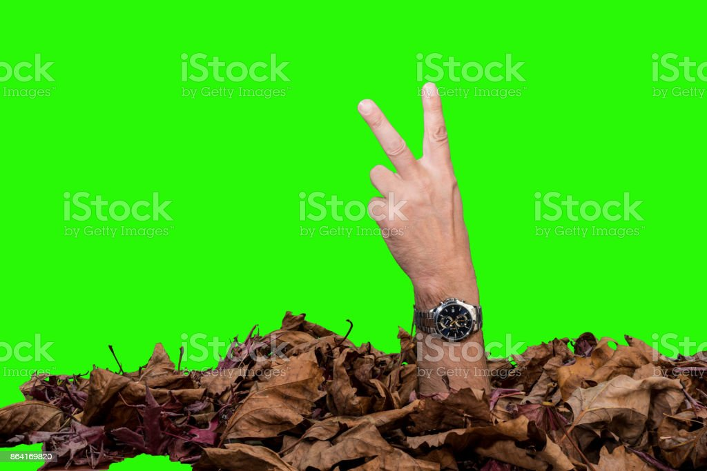 Hand and watch royalty-free stock photo