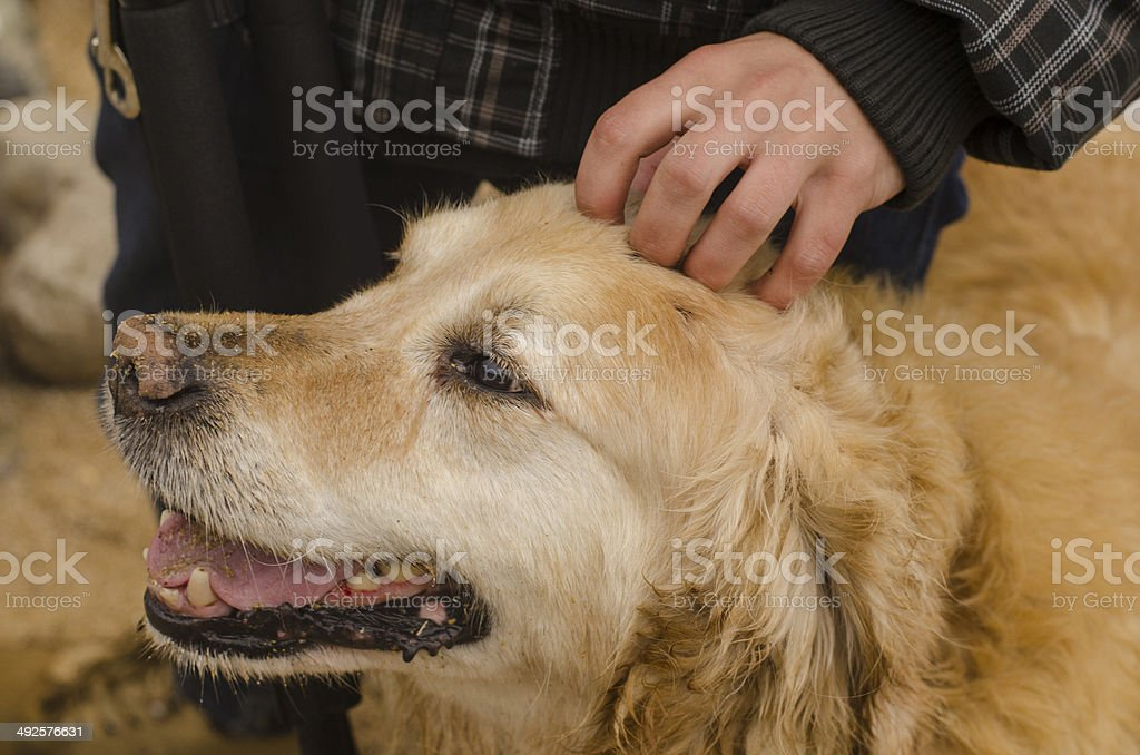 Hand caressing a dog royalty-free stock photo