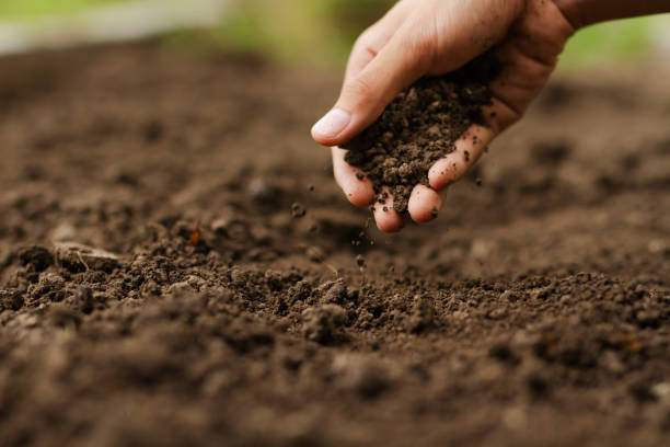 Hand checking soil on ground at vegetable garden Expert hand of farmer checking soil health before growth a seed of vegetable or plant seedling. Gardening technical, Agriculture concept. grounds stock pictures, royalty-free photos & images