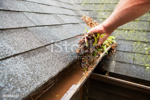 A male hand is cleaning a house roof eave copper rain gutter which is filled with plant debris and some growing plants. Some water has accumulated in the gutter and moss is growing on the background shingles.