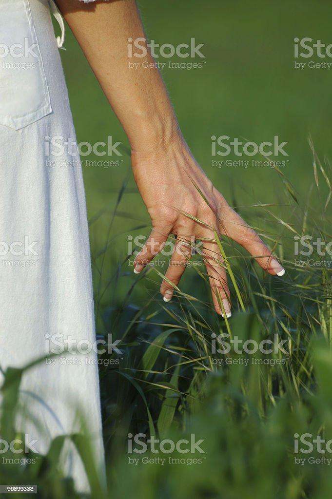 Hand close up touching wheat royalty-free stock photo