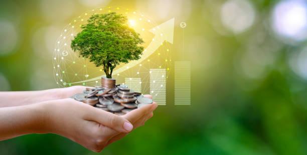 손 동전 나무 더미에 나무가 자 랍니다. 미래를 위한 비용 절감. 투자 아이디어 및 사업 성장. bokeh 태양이 있는 녹색 배경 - 책임 뉴스 사진 이미지