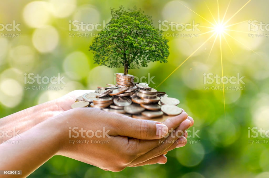 hand Coin tree The tree grows on the pile. Saving money for the future. Investment Ideas and Business Growth. Green background with bokeh sun stock photo