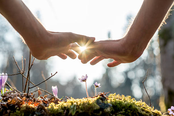 Hand Covering Flowers at the Garden with Sunlight stock photo
