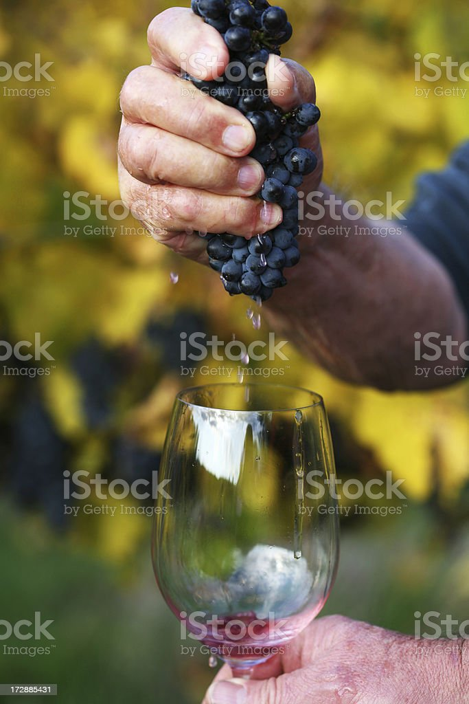 Hand crushed royalty-free stock photo