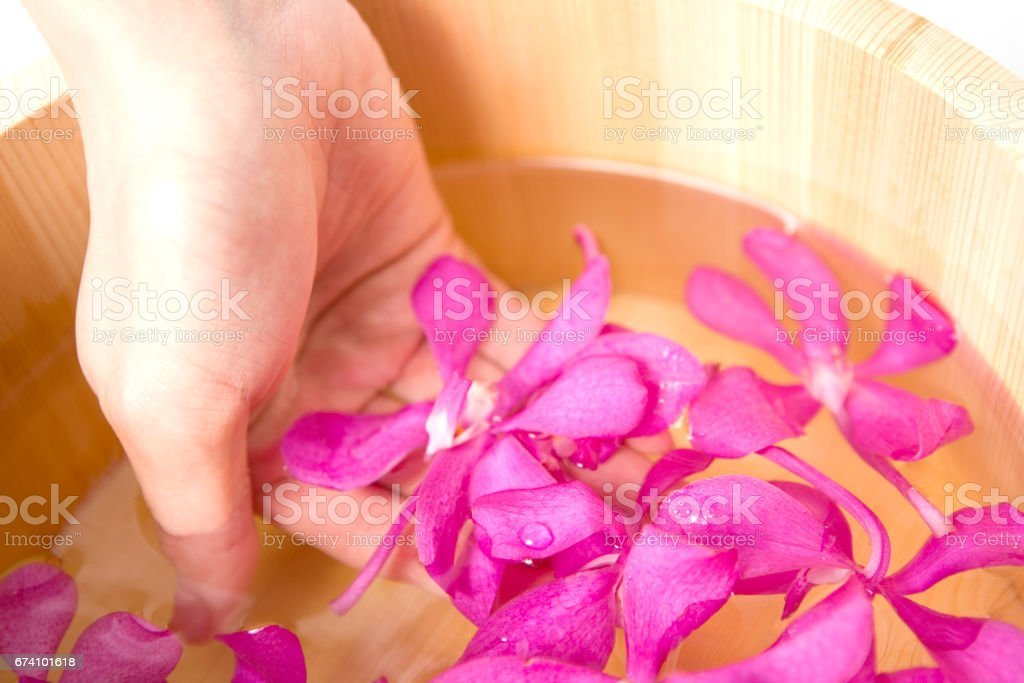 Hand cupping the flower petals royalty-free stock photo