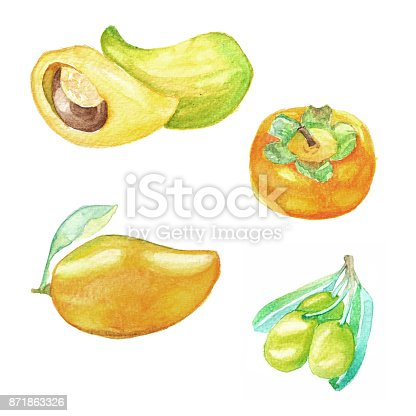 istock Hand dawn set with watercolor fruits, fresh food, mango, olive, sapote, persimmon 871863326