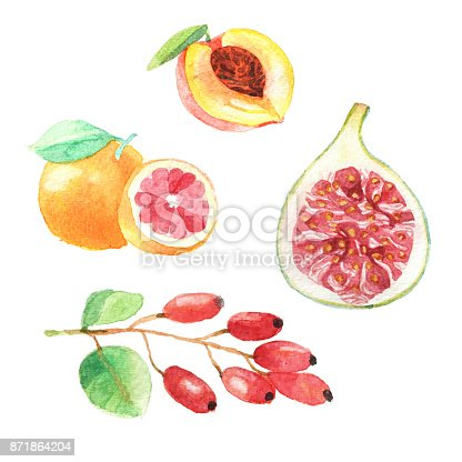 istock Hand dawn set with watercolor fruits, fresh food, peach, gojiberry, grapefruit, fig 871864204