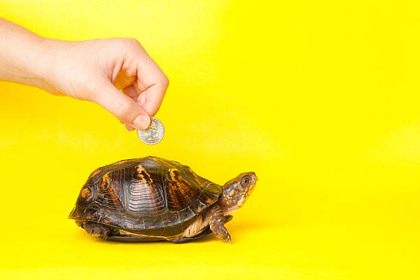 Hand verrechnen von Münze in Turtle Bank – Foto