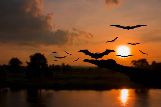 hand-teufel befreien fledermaus mit silhouetten und wasser reflektieren vor sonnenuntergang in halloween tag konzept hintergrund - wasserfledermaus stock-fotos und bilder