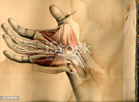 istock Hand dissection drawing 471008761