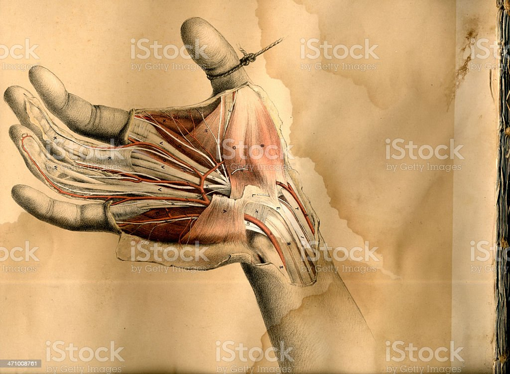 Hand dissection drawing stock photo
