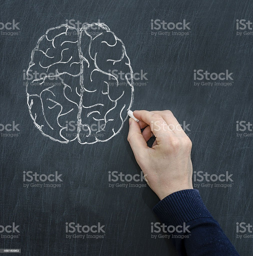 Hand drawing a diagram of the brain on a chalkboard stock photo
