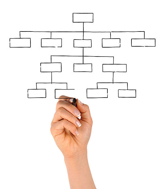 Hand Drawing Blank Organization Chart stock photo
