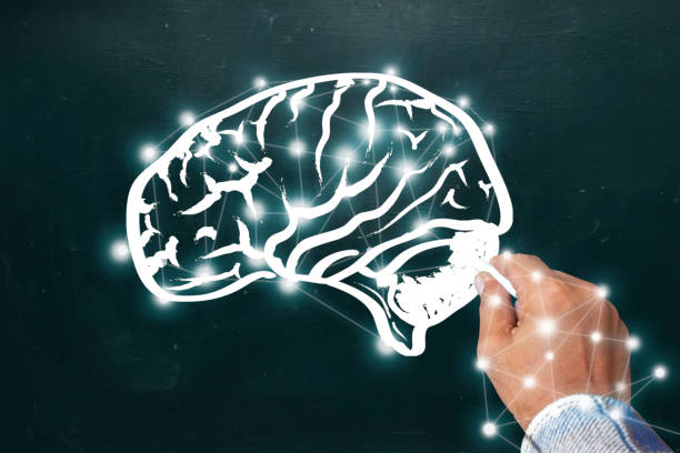 Hand drawing brain sketch on blackboard. Create a graphic like the brain. White Chalk Handle. Hand drawing brain sketch on blackboard. Brainstorming and idea concept.  Create a graphic like the brain. cerebellum stock pictures, royalty-free photos & images
