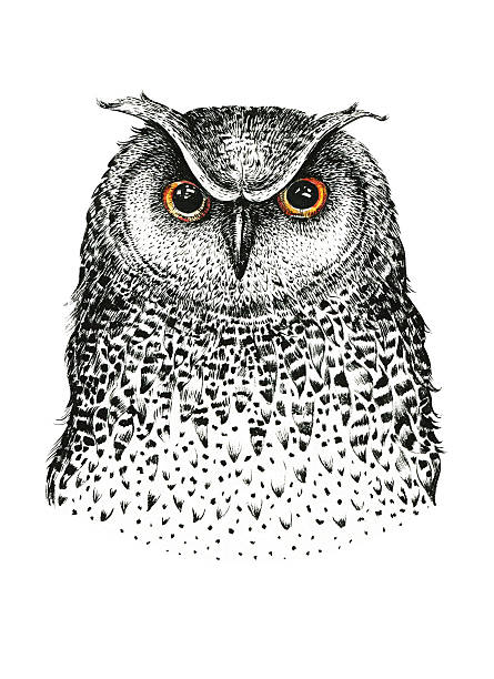 hand drawn black white illustration owl fly bird. art coloring - eule zeichnung stock-fotos und bilder