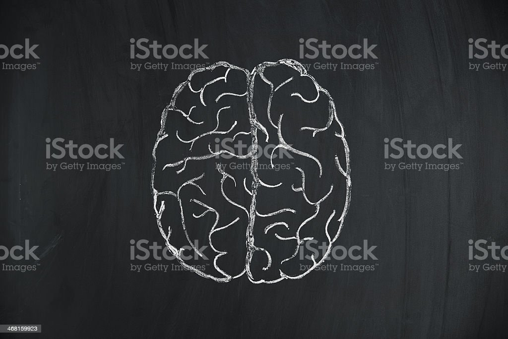 A hand drawn human brain in chalk stock photo