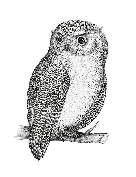 hand drawn isolated  black white illustration owl fly bird. trib - eule zeichnung stock-fotos und bilder