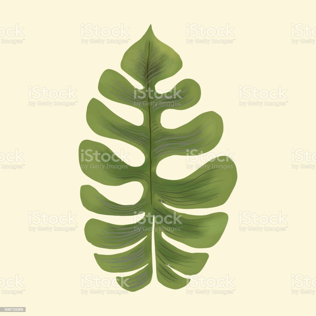 Hand drawn plant leaf isolated стоковое фото