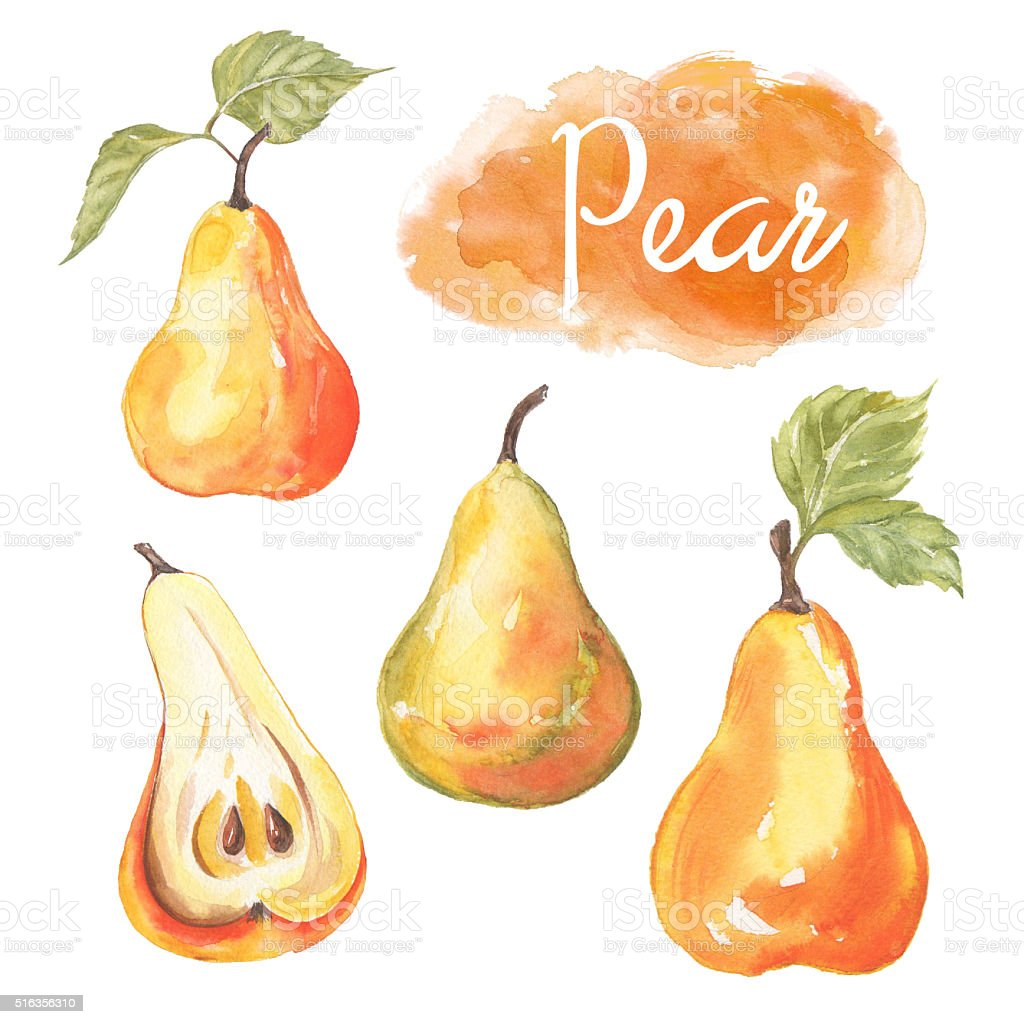 Hand drawn watercolor painting fresh pear stock photo