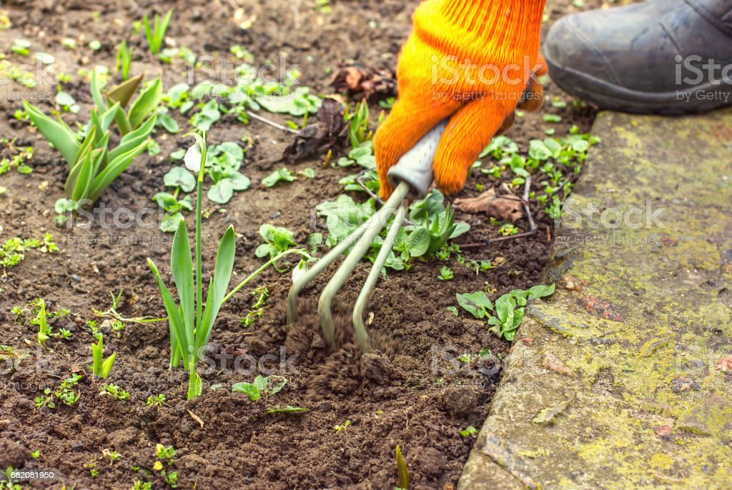 Feminino mão enxadas ervas daninhas no jardim, remoção de ervas daninhas gramíneas, limpeza no jardim em preparação de solo de primavera - foto de acervo