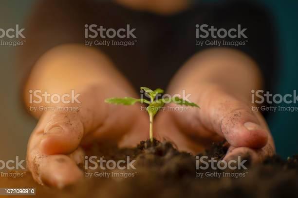 Hand gently holding rich soil for his marijuana plants picture id1072096910?b=1&k=6&m=1072096910&s=612x612&h=kmyfy3oggkpt dp1lb46o5abal7i58vtiq68 bnqldk=
