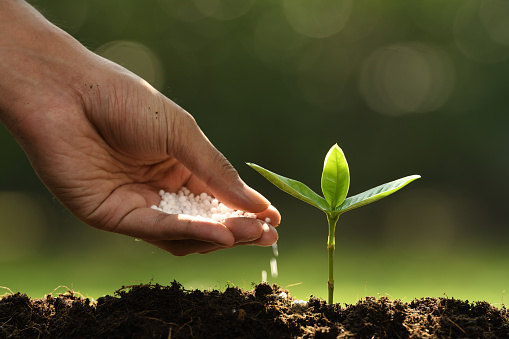 1089961140 istock photo Hand giving chemical fertilizer to young plant on nature background 1089961194