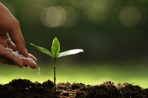 1089961140 istock photo Hand giving chemical fertilizer to young plant on nature background 1089961224