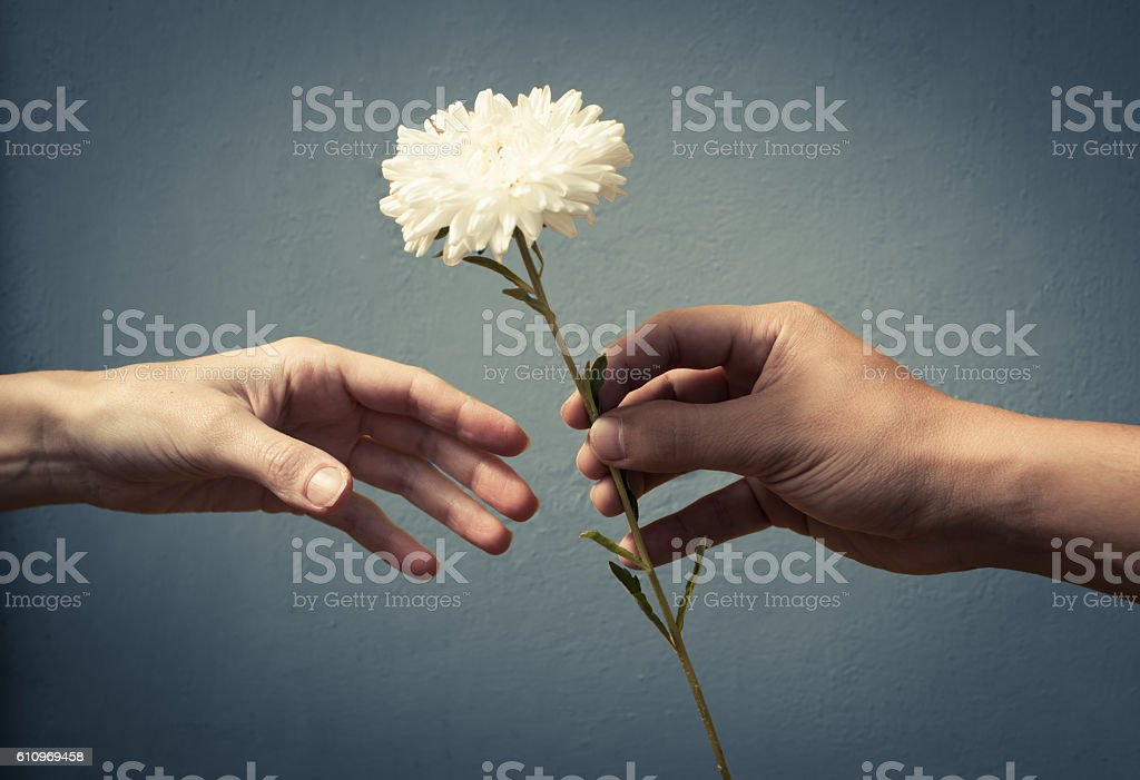 Hand giving hand a flower stock photo