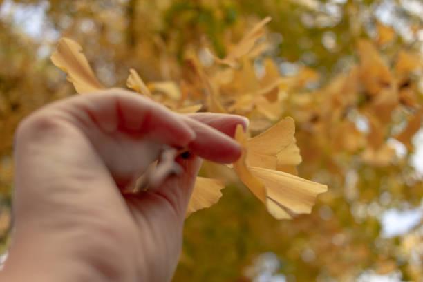 hand grabbing yellow leaf - monica pirozzi foto e immagini stock