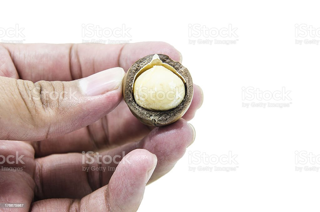 hand hold macadamia royalty-free stock photo