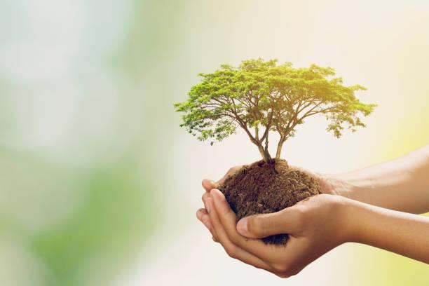 Hand holdig großen Baum wächst auf grünem Hintergrund – Foto