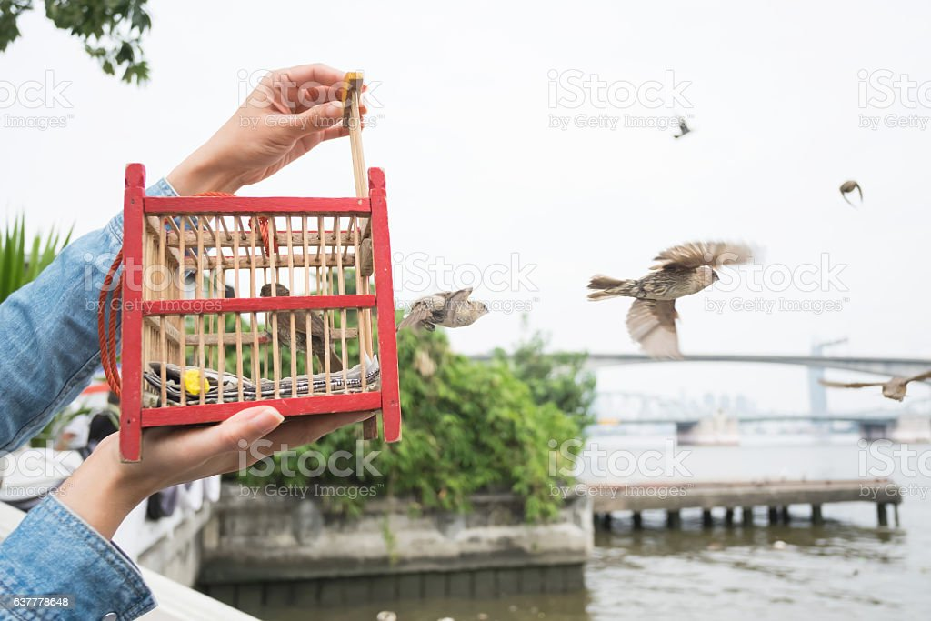 Hand holding a bird cage for liberation. stock photo